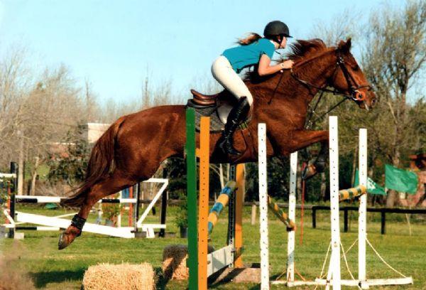 Ver detalles de Exhibición de caballos y concurso de salto