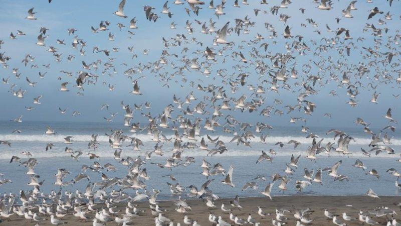Festival de bienvenida a las aves migratorias