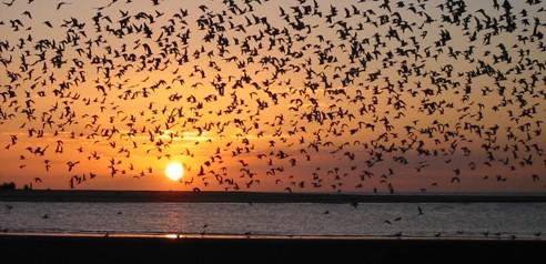 Ver detalles de Reserva Natural Punta Rasa