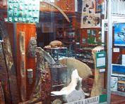 Ver detalles de Museo privado Profesor Alfa A. Kunert