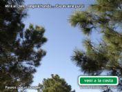 Ver detalles de Caminatas por bosques y playas en las localidades del Partido de La Costa